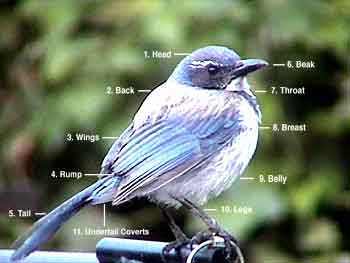 Identification Order of Bird