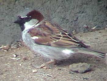 sparrow-house_350.jpg