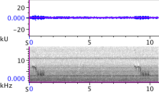 Waveform & Spectrogram of Black-capped Chickadee