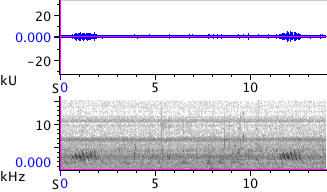 Waveform & Spectrogram of Purple Finch