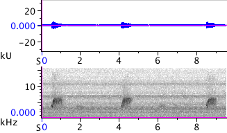Waveform & Spectrogram of Spotted Towhee